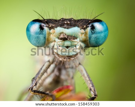 Dragonfly close up, focused on head