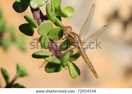 Dragonfly closeup on a plant in the wild
