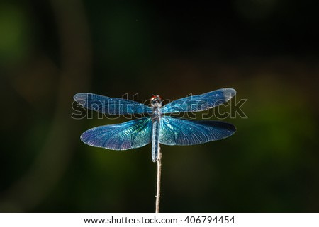Dragonfly, dragonfly , blue dragonflies, insects, nature. - stock photo
