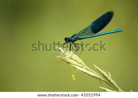 Dragonfly guarding its territory.