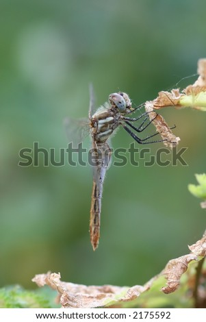 Dragonfly hanging from a plant