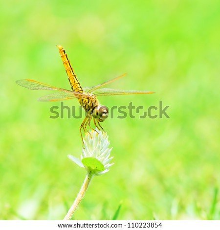 Dragonfly in nature. - stock photo