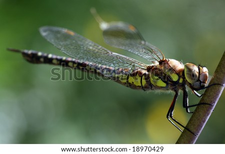 dragonfly in the garden, shallow depth of field
