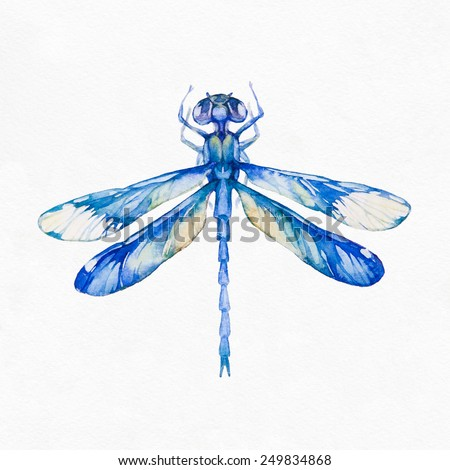 Dragonfly insect isolated on white background. Watercolor illustration. - stock photo