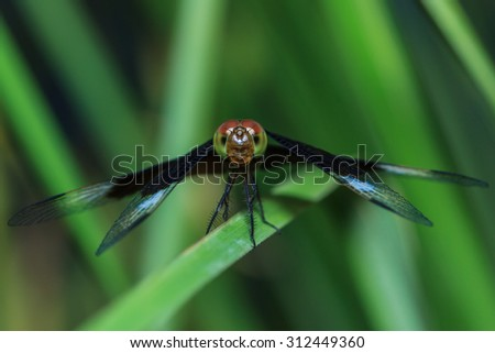 Dragonfly, insect, macro Dragonfly-eye focus-blur background. - stock photo