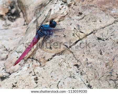 Dragonfly is hanging on a rock