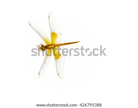 dragonfly isolated in white background.Insect collection,macro photography - stock photo
