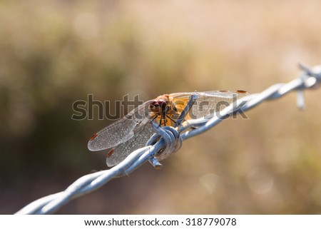 Dragonfly landed on the wire