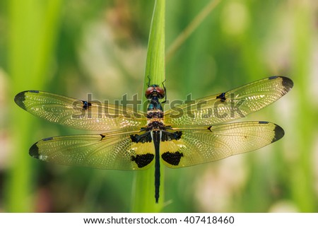 Dragonfly, Macro dragonfly, dragonfly , insect, animal, nature,macro,bug. - stock photo