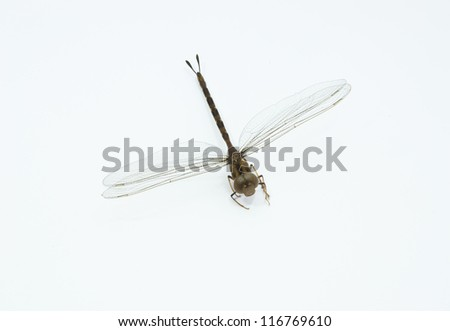 Dragonfly on a white background - stock photo