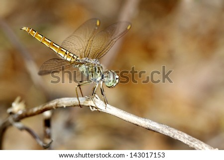 Dragonfly on branch in nature