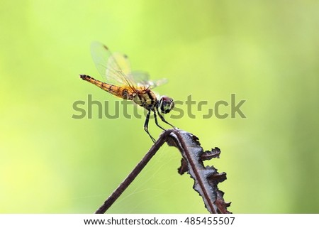 Dragonfly on dry leave