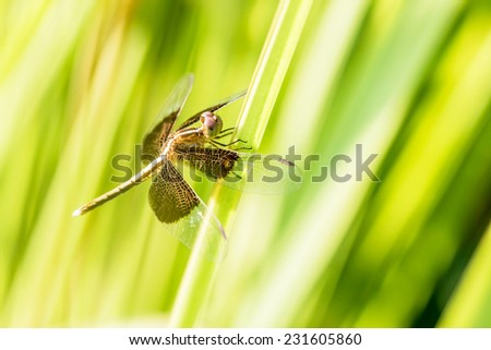 dragonfly on green grass