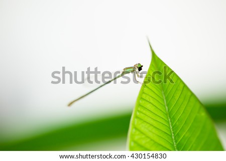 Dragonfly on green leaf .