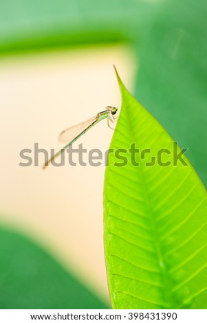 Dragonfly on green leaf in rainy season