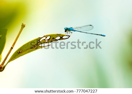 Dragonfly on the leaf.