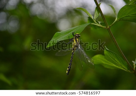 dragonfly on the leaves, close-up.
