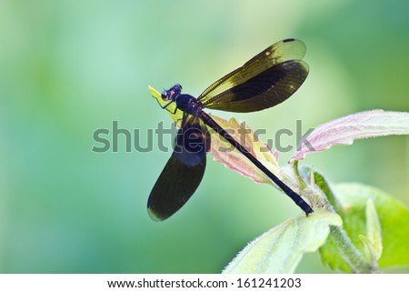 dragonfly on tree branch in wild nature
