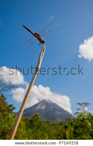 Dragonfly perching on twig against bright blue sky with Arenal Volcano in background, Costa Rica