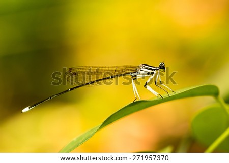 Dragonfly pin on green - stock photo