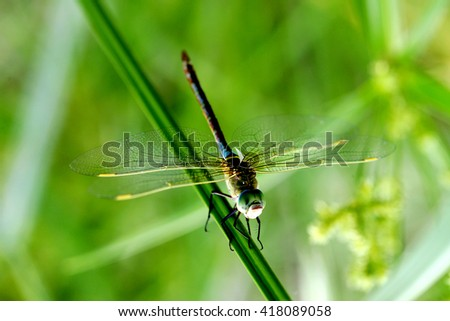 Dragonfly resting on a plant - stock photo
