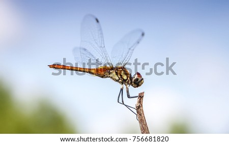 Dragonfly rests on a twig near the ocean under blue sky and white clouds, Thailand