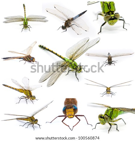 Dragonfly set on a white background. - stock photo