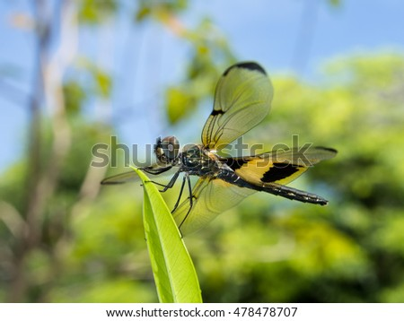 Dragonfly sit on leaf