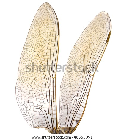 dragonfly wings in High resolution  isolated on white background - stock photo