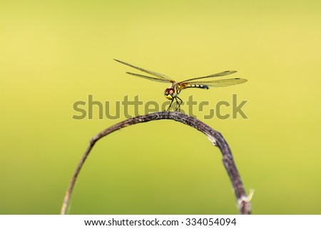 Dragonfly with blur beautiful nature background