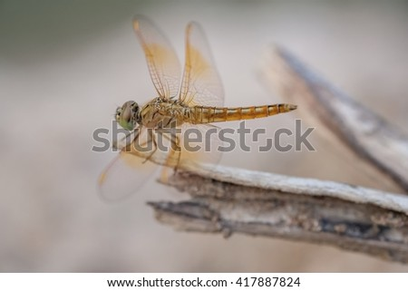 Dragonfly with nature background