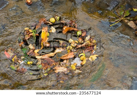 drain filled with autumn leaves and water - stock photo