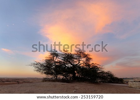 Dramatic cloud and the tree of life, Bahrain, HDR