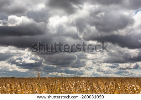 Dramatic clouds gathering for a storm over a ripe corn field ready for harvest in midwest USA - stock photo