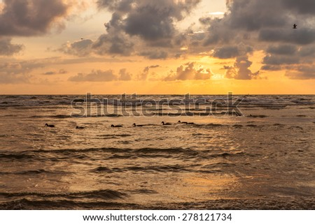 Dramatic cloudy sunset over Baltic sea coast in Liepaja, Latvia. There are wild ducks swimming in single file and a seagull flying over. - stock photo