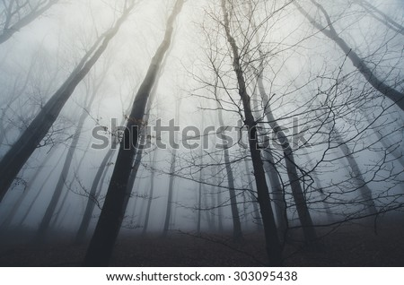 dramatic dark forest halloween scene - stock photo