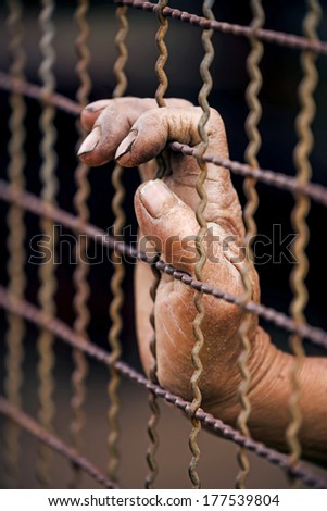 dramatic  hands  man inside mesh cage  - stock photo