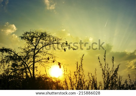 Dramatic savannah sunset and a thorn tree silhouette, zen meditative background - stock photo