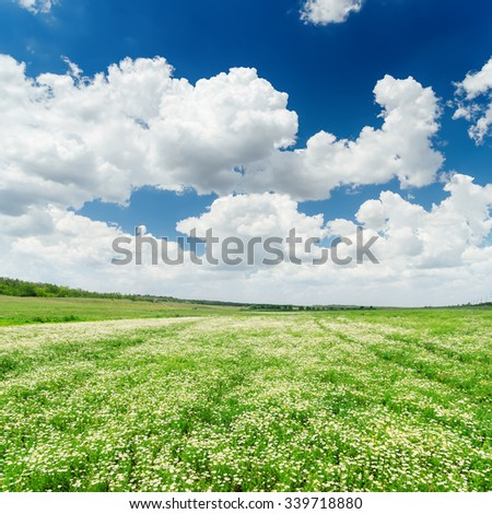 dramatic sky and green meadow with chamomiles - stock photo