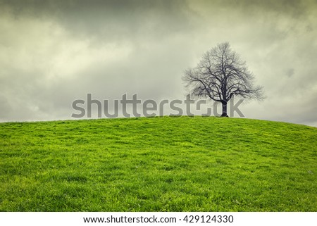 Dramatic sky over old lonely tree - Lonely tree  - stock photo