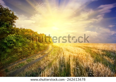Dramatic sky over the road in field with yellow ears - stock photo