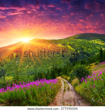 Dramatic summer scene in the mountains. Sunrise in the Carpathians with blooming beggars-ticks flowers. Ukraine, Europe.  - stock photo