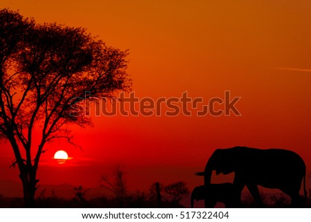 Dramatic sunset in Kruger national park south africa