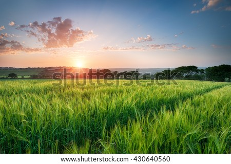 Dramatic sunset over fields of ripening barley near West Taphouse in Cornwall - stock photo