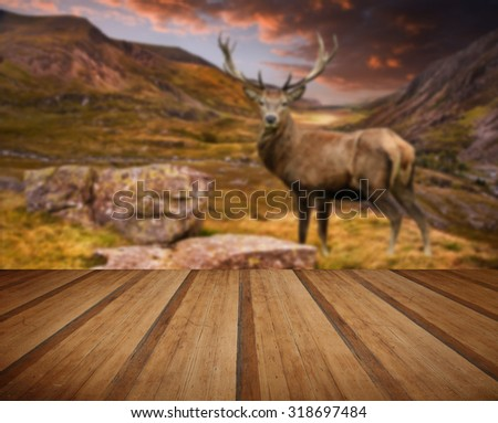 Dramatic sunset over mountain range and red deer stag with wooden planks floor - stock photo