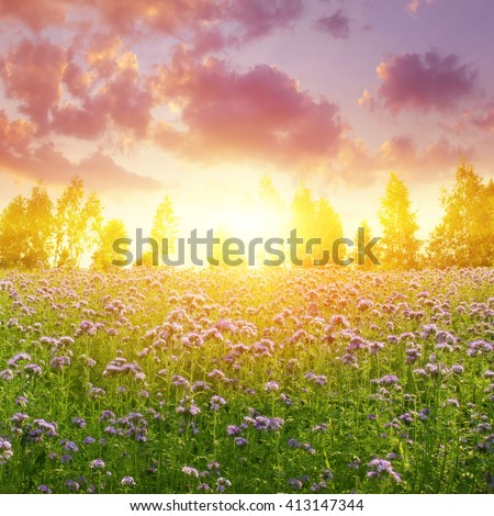 Dramatic sunset over summer field. - stock photo