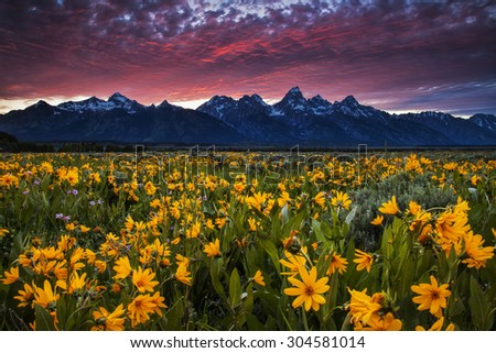 Dramatic sunset over the mountains and the wildflowers at Antelope Flats in Wyoming's Grand Teton National Park - stock photo