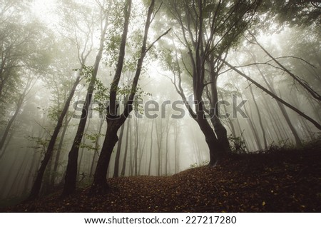 dramatic trees in mysterious forest - stock photo
