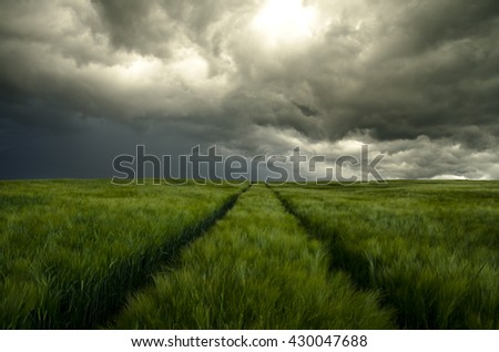 Dramatically sky before storm over green spring rye field. Beautiful dark wallpaper.