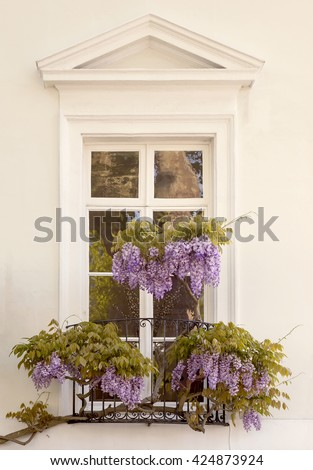 Draping Wisteria. Beautiful elegant wisteria drapes across the wrought iron balcony of an equally elegant window.